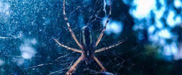 Găsești un păianjen în casă... îl omori sau îl lași liber? Cum e mai bine? | DeStiut.ro