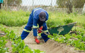 Britanicii le duc dorul românilor! Fermierii britanici, disperați. Riscă să rămână cu recoltele pe câmp!