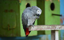 """Papagalii de la o Grădină Zoologică din Anglia, """"concediați"""" din cauză că înjurau vizitatorii"""