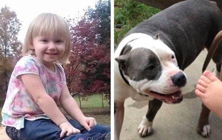 O fetiță de 2 ani a dispărut timp de 2 zile - câinele ei i-a rămas alături tot timpul și este considerat un erou